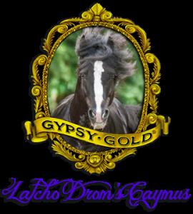 Latcho Drom's Caymus