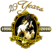 Gypsy Gold – America's Gypsy Vanner Foundation Farm logo