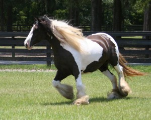 Crown Darby 2006 trot2