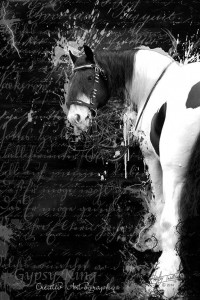 Haley Indellicate of Creative Art Photography's beautiful tribute to The Gypsy King